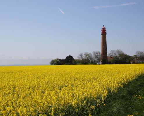 Fehmarn im Mai Fehmarn Ostsee Ostseeinsel Insel Fehmarn Leuchtturm Rapsfeld